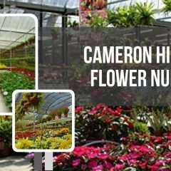 Cameron Highlands Flower Nurseries