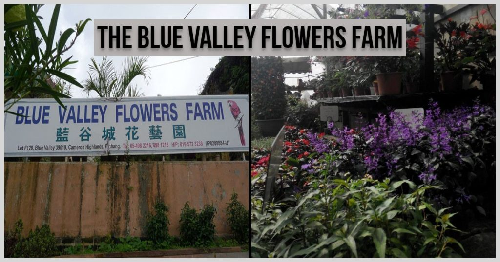 The Blue Valley Flowers Farm